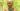 Tulsi Gowda l'enciclopedia della foresta